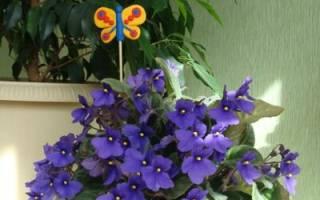 Выбор комнатных растений советы начинающим цветоводам