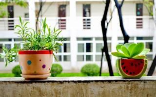 Как использовать удобрение из гумуса для комнатных растений