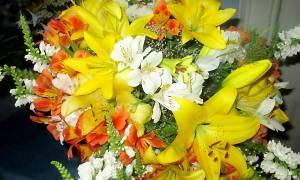Чем болеют лилии
