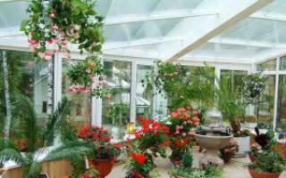 Цветы идеально подходящие непосредственно для зимнего сада