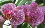 Болезни орхидей описание и меры борьбы