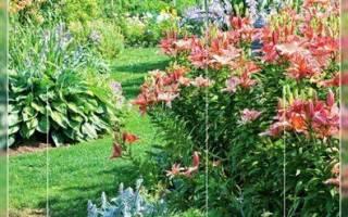 Цветы вдоль дорожки фото какие посадить