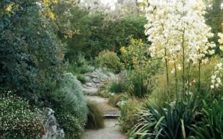Юкка садовая посадка осенью и уход в открытом грунте