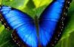 Комнатные цветы гиппеаструм как ухаживать
