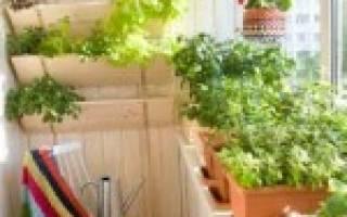 Лучшие однолетние цветы для клумб и балконов