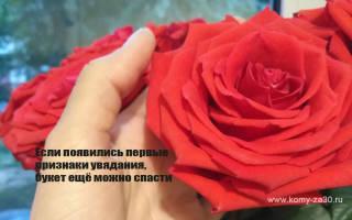 Что делать с завядшими розами