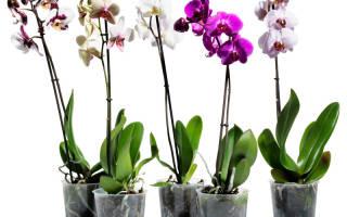Домашние цветы орхидеи с фото