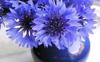 Цветы с синими цветами