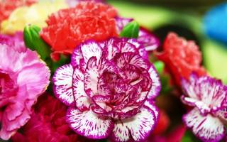 Цветы садовые многолетние названия