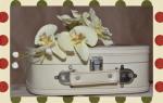Как пересадить и как ухаживать за орхидеей