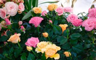 Горшок для розы комнатной