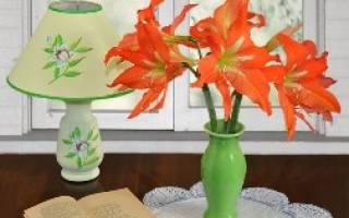 Амариллис прекрасный легендарный цветок