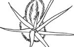 Весна на родине кактусов