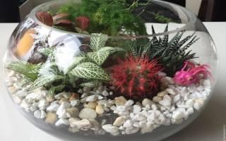 Аквариум и комнатные растения