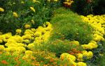 Однолетние тенелюбивые садовые цветы