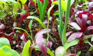 Виды размножения комнатных растений вегетативное и генеративное