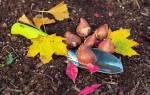 Когда высаживать луковицы тюльпанов осенью