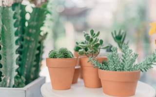 Архив метки комнатные растения