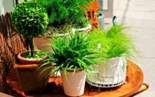 Йод как удобрение для комнатных растений