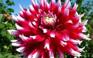 Тенелюбивые и теневыносливые цветы для сада и дачи