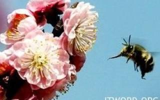 Цветы привлекают пчел электричеством