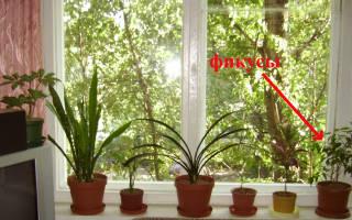 Как вырастить бонсаи из кипариса