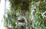 До какой температуры можно держать комнатные растения на улице