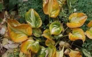 Уход за многолетними цветами осенью подготовка к зиме