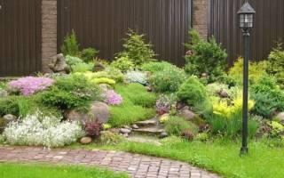 Разнообразие почвопокровных многолетних растений для сада