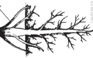 Как называется способ размножения комнатных растений представленный на рисунке