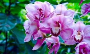 Выставка орхидей цветущий сад в главном ботсаду