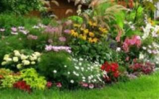 Неприхотливые и долгоцветущие цветыоднолетники для сада что выбрать