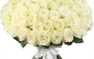 Роза аваланж описание сорта выращивание и уход