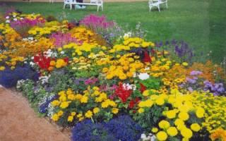 Самые популярные многолетние долгоцветущие растения