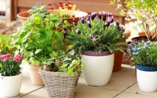 Зола как удобрение для комнатных цветов как применять