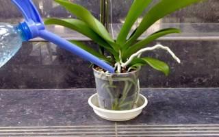Как разводить янтарную кислоту в таблетках для полива комнатных цветов
