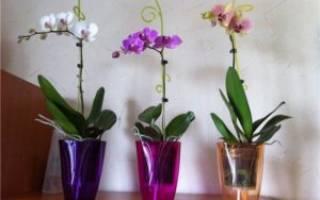 Как правильно ухаживать за купленной в горшке орхидеей