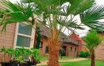 Домашний цветок пальма название