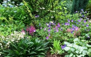 Тенелюбивые садовые цветы многолетники подборка лучших сортов