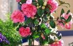 Цветок камелия как ухаживать в домашних условиях