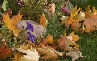Уход на даче за цветами осенью