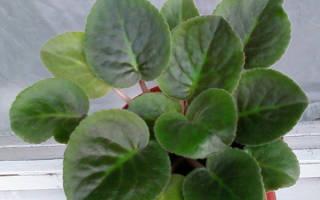 Заболевание комнатных растений и меры борьбы с ними