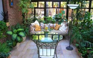 Большие комнатные растения которые любят тень