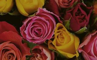 Салон wwwflowershopru самые свежие цветы в москве с доставкой