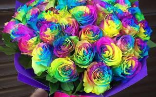 Радужные розы как выращивают
