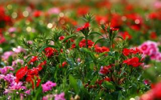 Однолетние цветы для оформления затененных мест приусадебного участка