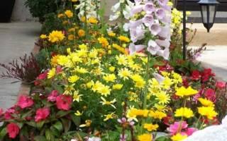 Красивые однолетники цветущие все лето
