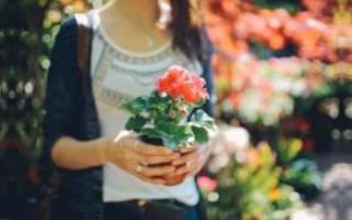 Как выращивать цветок в комнате