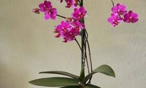 В какой грунт сажать орхидею