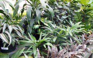 Декоративные комнатные растения на выставке